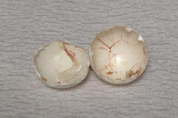 卵膜.jpg