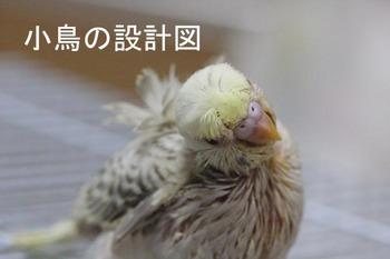 IMG_2626両羽衣ファロー.jpg