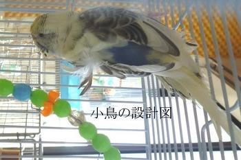P1050271片羽衣4ハルのコピー.jpg